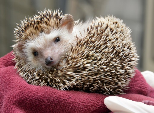 Ask the Vet: Questions about Exotic Pets