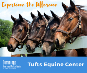 Tufts Equine Center