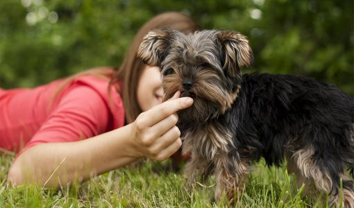 Does Your Pet Need Supplements?