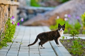 Dear Doctor: Toxic Plants and Outdoor Cats