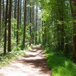Forest Path feature