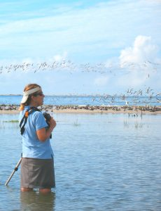 Paula conducts field surveys during spring and fall migrations for the International Shore Bird Survey.