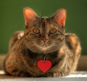 Have a Heart for Shelter Cats