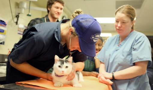Take a Pulse on your Pet's Health Care Needs