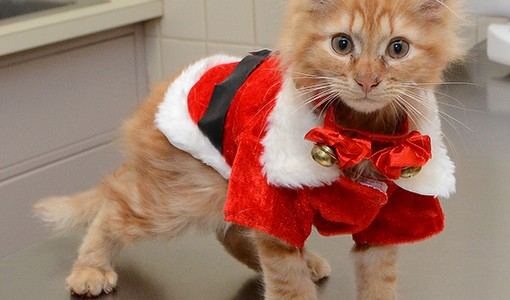 Holiday Safety For Your Pet