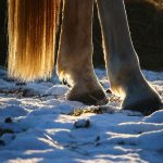 horse hooves winter snow