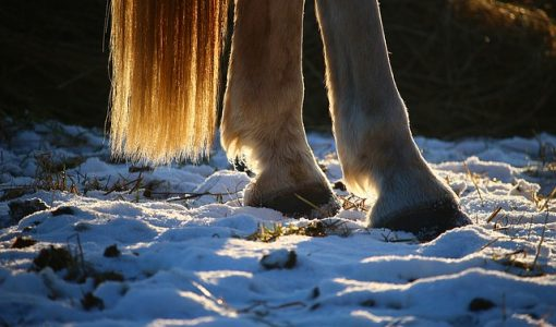 Maintaining Hoof Health in the Winter