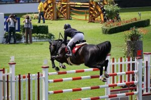 Osteoarthritis can affect the performance and longevity of sport horses.