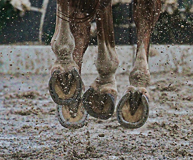Equine Clinical Case Challenge: Ulcerated Skin Mass of the Fetlock