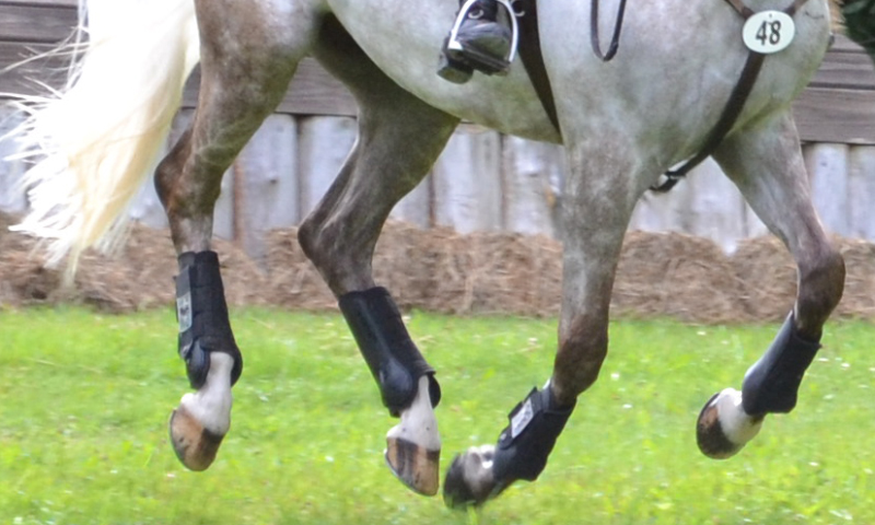 Rehabilitative Legwear for Horses: A Worldwide Collaboration