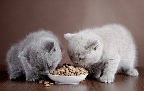 Dear Doctor: How to Feed Kittens and their Nursing Mom