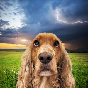 Boom! Boom! Helping Your Dog with Thunderstorm Phobias