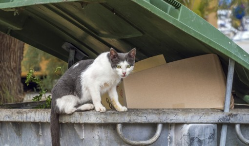 A humane approach to controlling feral cats