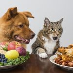 Dog and cat choosing meat versus veggies and fruits