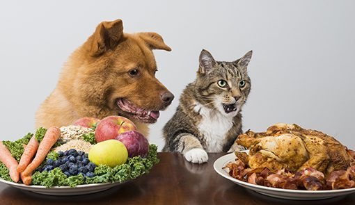 Holidays are Around the Corner: Watching Your Pet's Waistline
