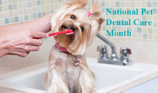 Tips for Keeping Your Pet's Teeth Healthy and Clean
