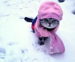 Keep Your Pet Warm During Cold Winter Days