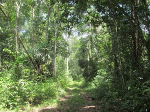 One of the trails I hiked down in search of camera traps.