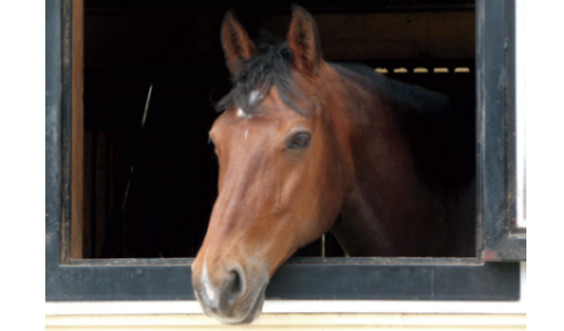Warmblood Back and Better than Ever Thanks to Sports Medicine Service
