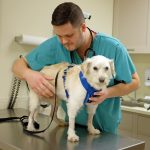 neurology-dog-patient-013