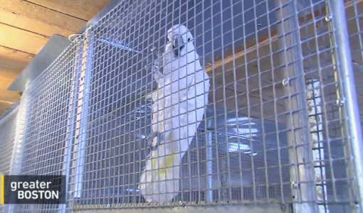 Parrot Orphanage: Leave it to Rhode Island