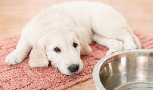 4 mistakes you're making when feeding your pet