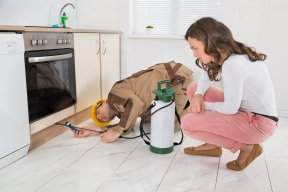 Using Pet-Safe Pest Control