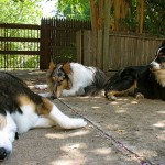 pets in shade