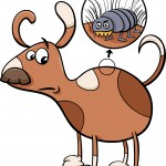 dog and flea cartoon illustration
