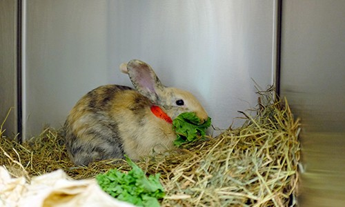 Diagnosing Renal Disease in Rabbits – Clinical Case Challenge