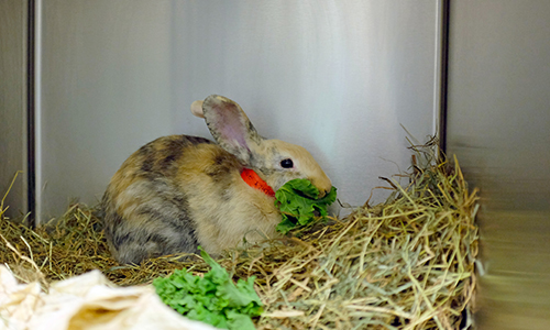 Ten rabbits were spayed at the Lerner Spay/Neuter  Clinic on behalf of the Animal Rescue League of Boston.