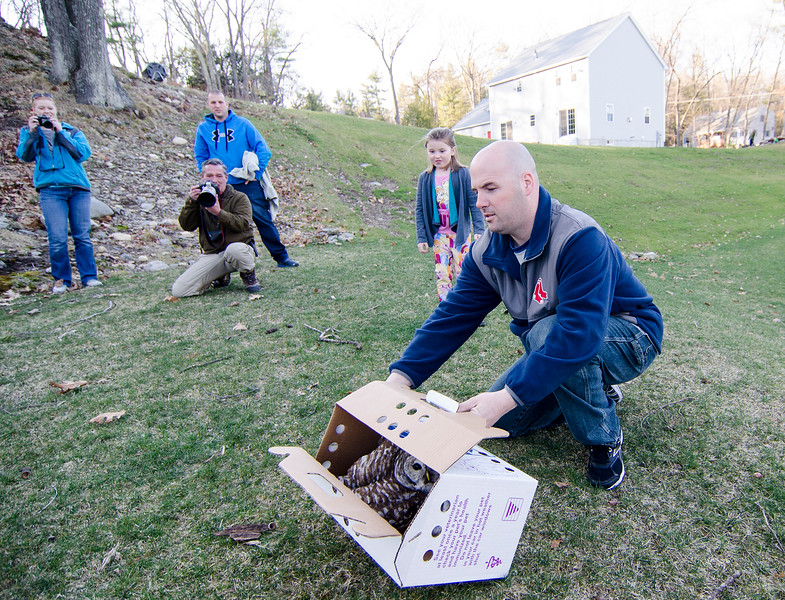 Lunenburg Sgt. Jack Hebert releases a Barred Owl in Lunenburg on Wednesday evening. The injured owl was rescued by Lunenburg officers in January, and rehabilitated at Tufts before being released in the wild. SENTINEL & ENTERPRISE / Ashley Green