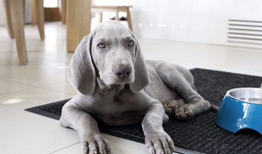 9 Signs Your Puppy is No Longer a Puppy