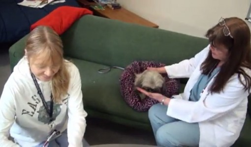 Giving Pills to Your Pet