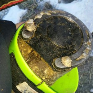 Bubble pads are one option to help keep ice and snow from building up in your horse's hooves and shoes.