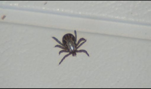 Warm, spring weather means tick season is here
