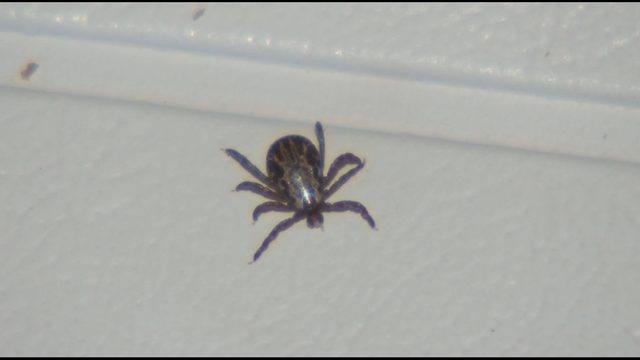 Image for Warm, spring weather means tick season is here