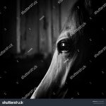 stock photo horse eye in the dark in monochromatic colors