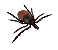 Tick Talk: What can I do to protect my pet: and my family from ticks?
