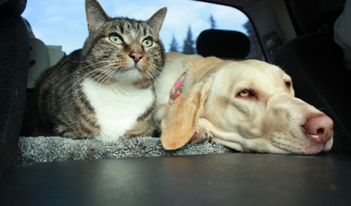 Traveling with Pets: Should they Stay or Should they Go?