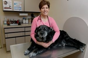 Veterinarian of the year focuses on 'big fixes' for population control