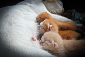 Dear Doctor – The ideal time to wean kittens