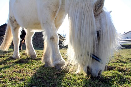 Testing for Equine Cushing's Disease