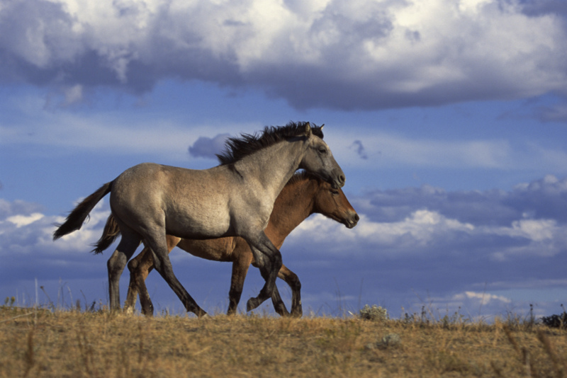 Efficacy of dart-delivered PZP-22 immunocontraceptive vaccine in wild horses (Equus caballus) in baited traps in New Mexico