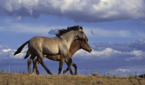 The 2014 Northeast Wild Horse Adoption Conference