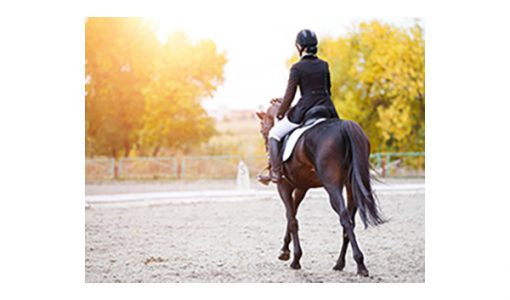 Going the Extra Mile: How to Safely Recondition Your Horse