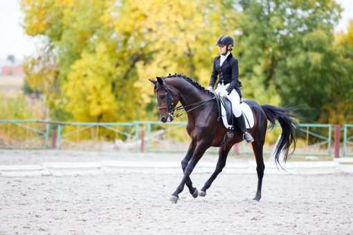 While horses that were previously fit will recondition quicker, the longer they are laid up the longer it will take to get back in shape, so keep that in mind when setting goals and timelines.