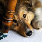 worried-dog-2377ffef
