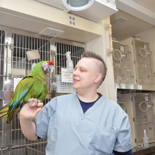 At Your Service: Zoological Companion Animal Medicine